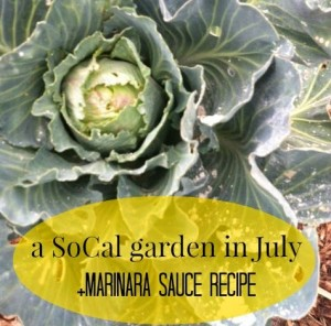 My SoCal Garden + A Single Use Marinara Recipe // The Ezer Wife