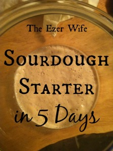 How to get a sour dough starter in 5 days. Perfect for banana nut bread, pancakes, and more! // The Ezer Wife